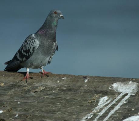 Τα προβλήματα που δημιουργούν τα πτηνά