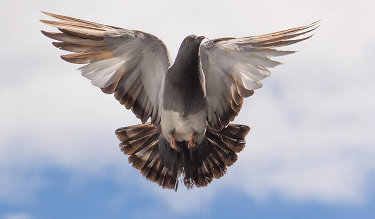 Απώθηση πτηνών - ΠΡΟΣΤΑΣΙΑ ΖΑΪΡΗΣ