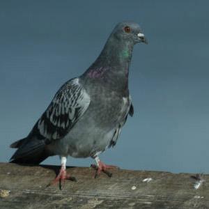 Απώθηση φιδιών και πτηνών - ΠΡΟΣΤΑΣΙΑ