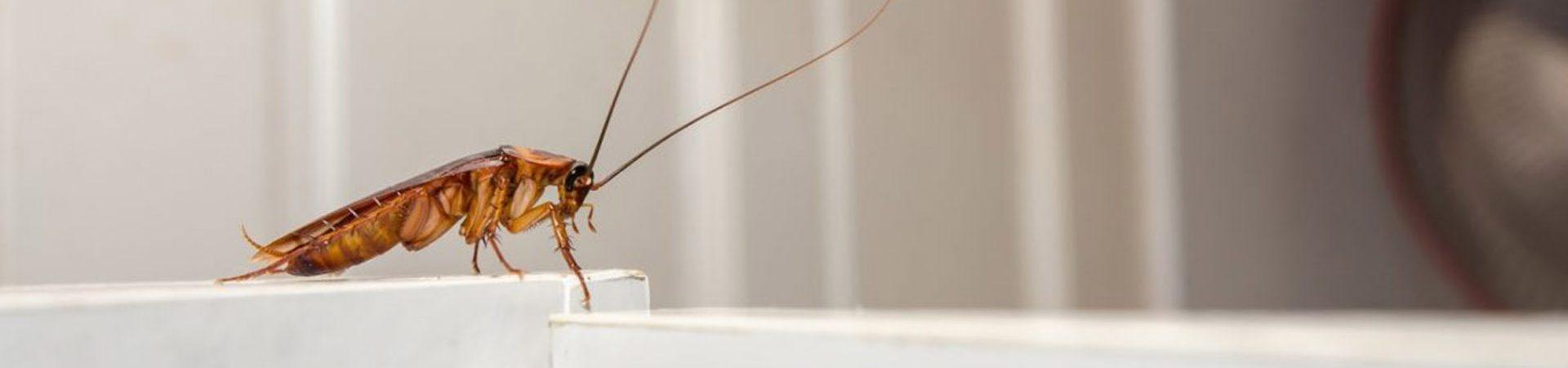 Απεντομώσεις - αντιμετώπιση αρθρόποδων - Κατσαρίδες