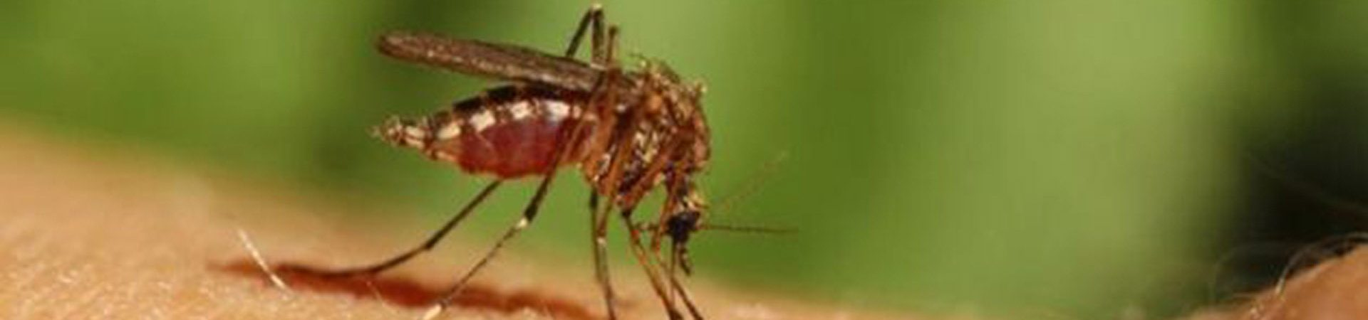 Απεντομώσεις - Αντιμετώπιση αρθρόποδων - Κουνούπια - Σκνίπες